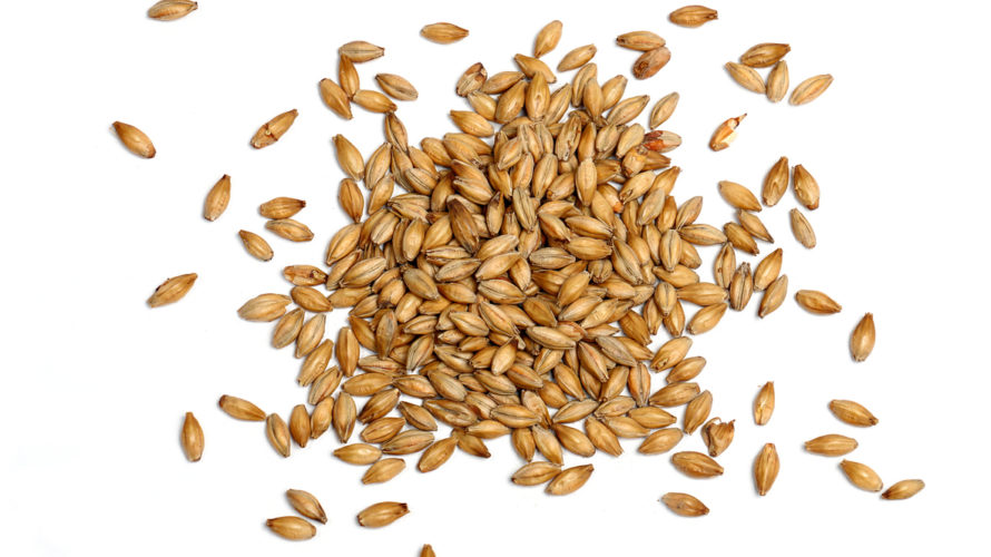 Malted Barley on White Background